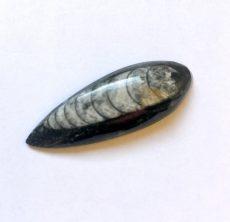 Orthoceras fosszília kaboson - 46*19 mm