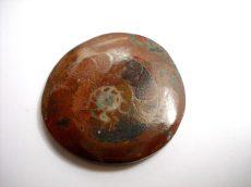 Red sea ammonite fossil cabochon - 29 mm