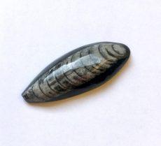 Orthoceras fosszília kaboson - 46*18 mm